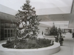 Short Hills Mall - pre-enclosure (1962)  A Feature News Service release from 1962 - 'A 'Tree full of Christmas Present